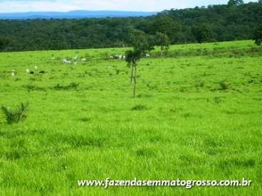 Fazenda barra do garcas / mt 700 hect  - R$3000000 - Agroads