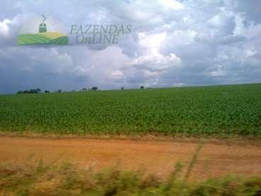 Fazenda dupla aptidao 7260 hectares alto boa vista