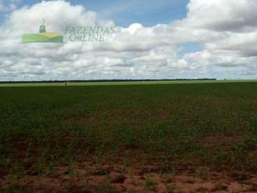 Fazenda soja 3066 hectares campo novo do parecis-m