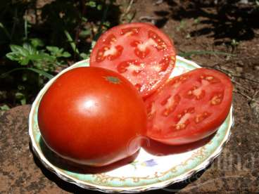 Tomate super sioux